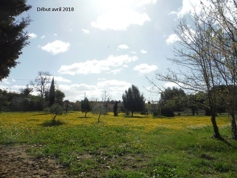 JdB de 4 hectares de pâtures dans le SUD : Avril 2019, et toujours la sécheresse... - Page 8 14021p10