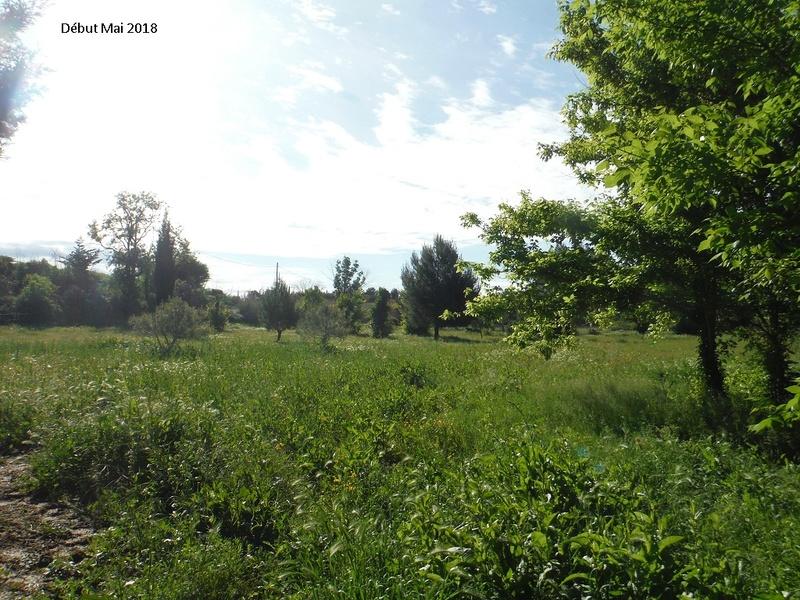 JdB de 4 hectares de pâtures dans le SUD : Avril 2019, et toujours la sécheresse... - Page 8 14022p10