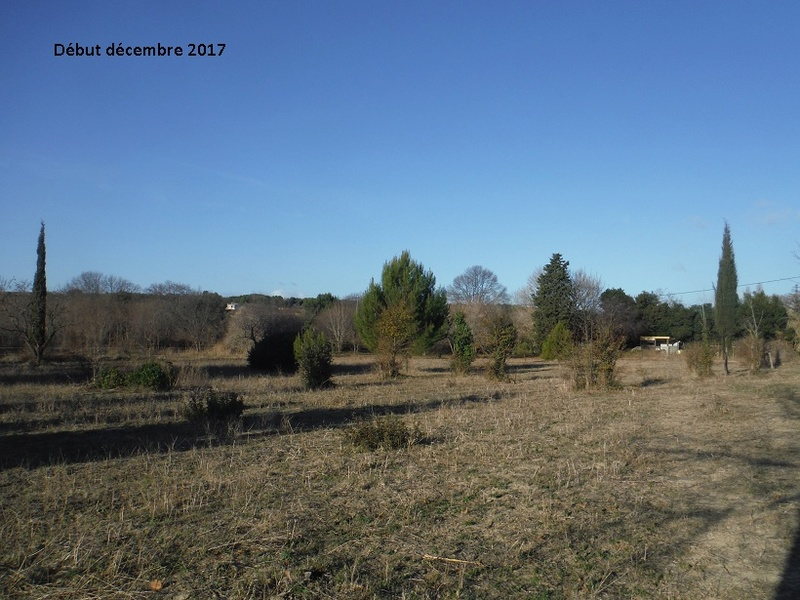 JdB de 4 hectares de pâtures dans le SUD : Avril 2019, et toujours la sécheresse... - Page 7 15017p10