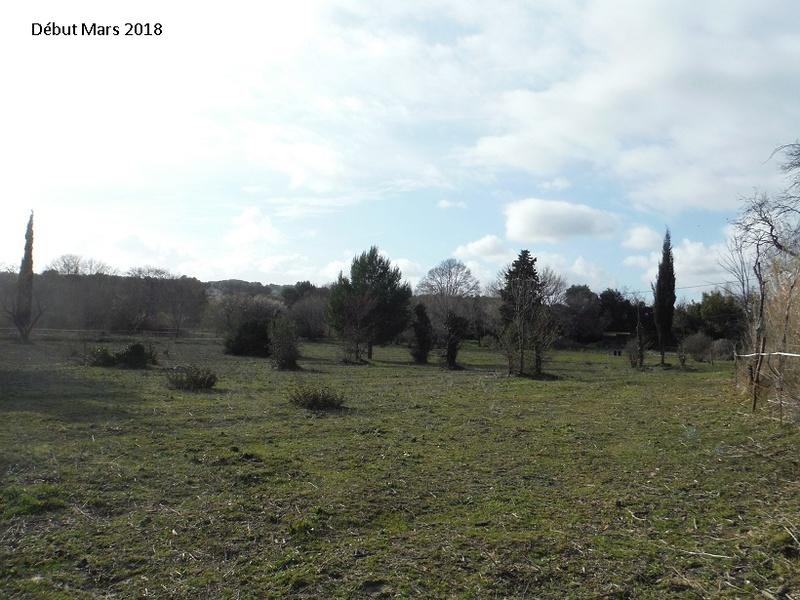 JdB de 4 hectares de pâtures dans le SUD : Avril 2019, et toujours la sécheresse... - Page 8 15020p10