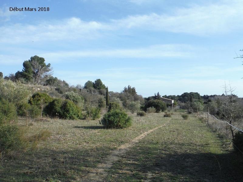 JdB de 4 hectares de pâtures dans le SUD : Avril 2019, et toujours la sécheresse... - Page 8 2020pa10