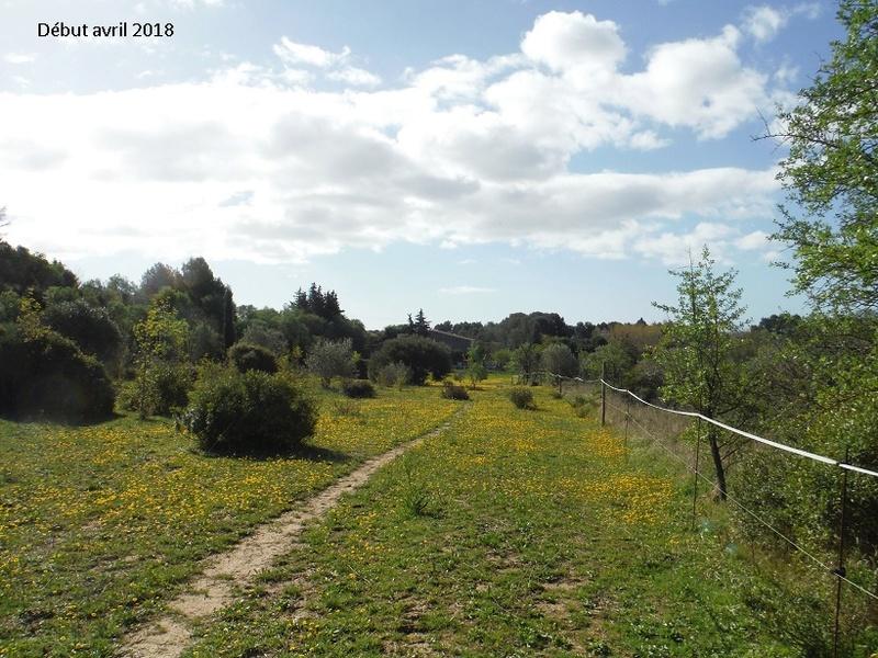 JdB de 4 hectares de pâtures dans le SUD : Avril 2019, et toujours la sécheresse... - Page 8 2021pa10