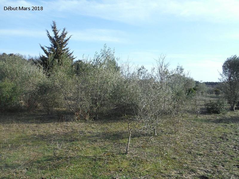 JdB de 4 hectares de pâtures dans le SUD : Avril 2019, et toujours la sécheresse... - Page 8 3020pa10