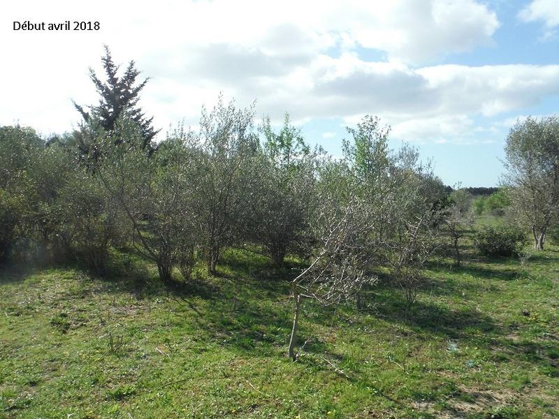 JdB de 4 hectares de pâtures dans le SUD : Avril 2019, et toujours la sécheresse... - Page 8 3021pa10