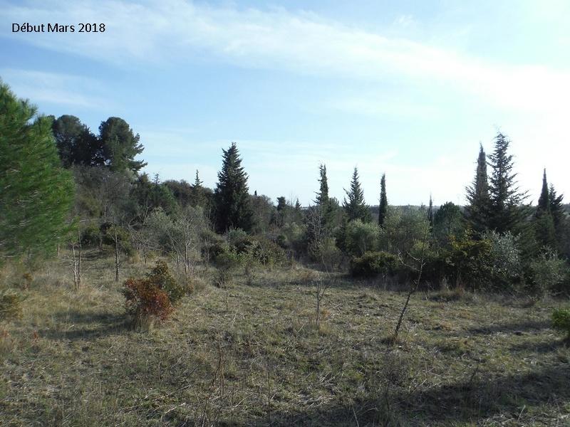 JdB de 4 hectares de pâtures dans le SUD : Avril 2019, et toujours la sécheresse... - Page 8 5020pa10