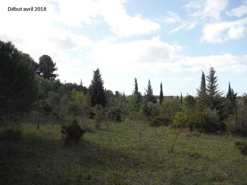 JdB de 4 hectares de pâtures dans le SUD : Avril 2019, et toujours la sécheresse... - Page 8 5021pa10