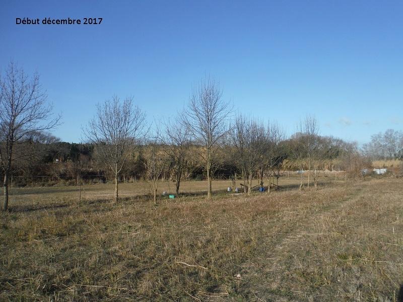JdB de 4 hectares de pâtures dans le SUD : Avril 2019, et toujours la sécheresse... - Page 7 6017pa10