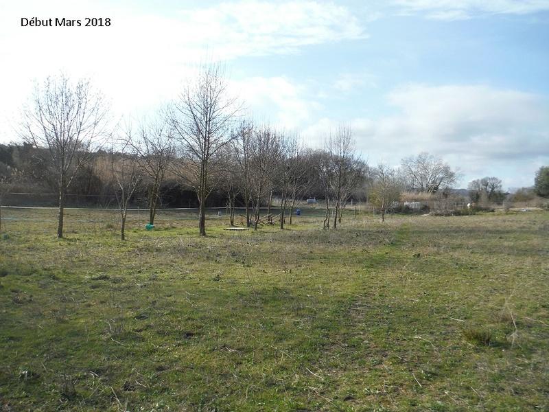 JdB de 4 hectares de pâtures dans le SUD : Avril 2019, et toujours la sécheresse... - Page 8 6020pa10