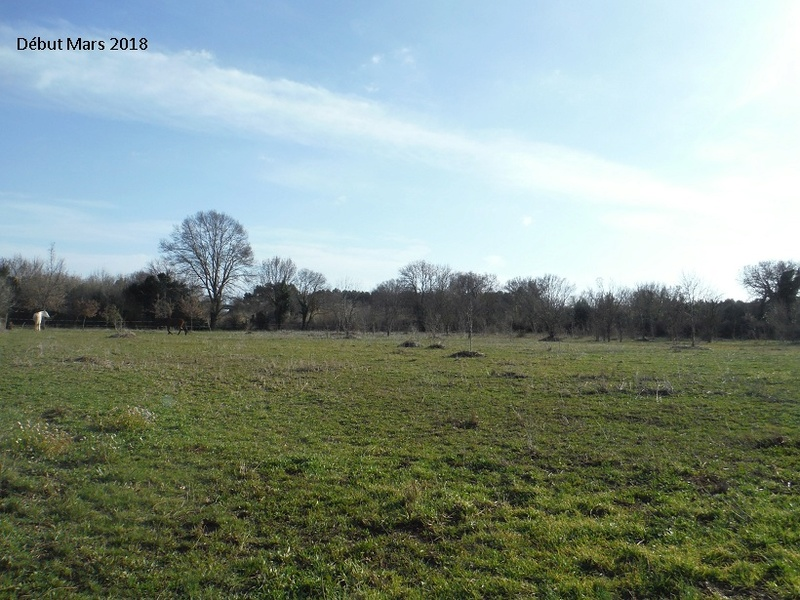 JdB de 4 hectares de pâtures dans le SUD : Avril 2019, et toujours la sécheresse... - Page 8 8020pa10