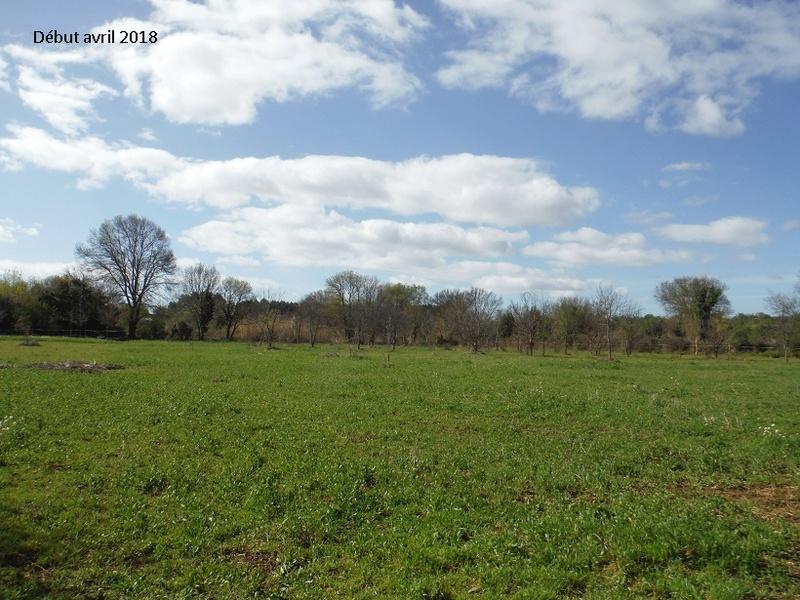JdB de 4 hectares de pâtures dans le SUD : Avril 2019, et toujours la sécheresse... - Page 8 8021pa10