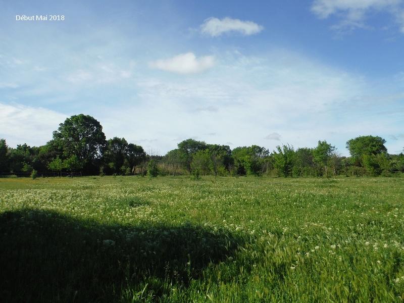 JdB de 4 hectares de pâtures dans le SUD : Avril 2019, et toujours la sécheresse... - Page 8 8022pa10