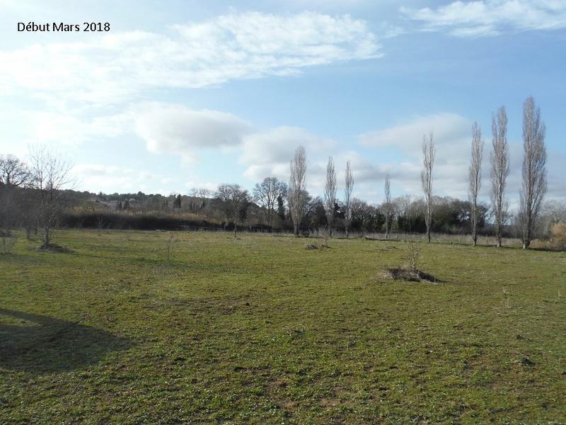 JdB de 4 hectares de pâtures dans le SUD : Avril 2019, et toujours la sécheresse... - Page 8 9020pa10