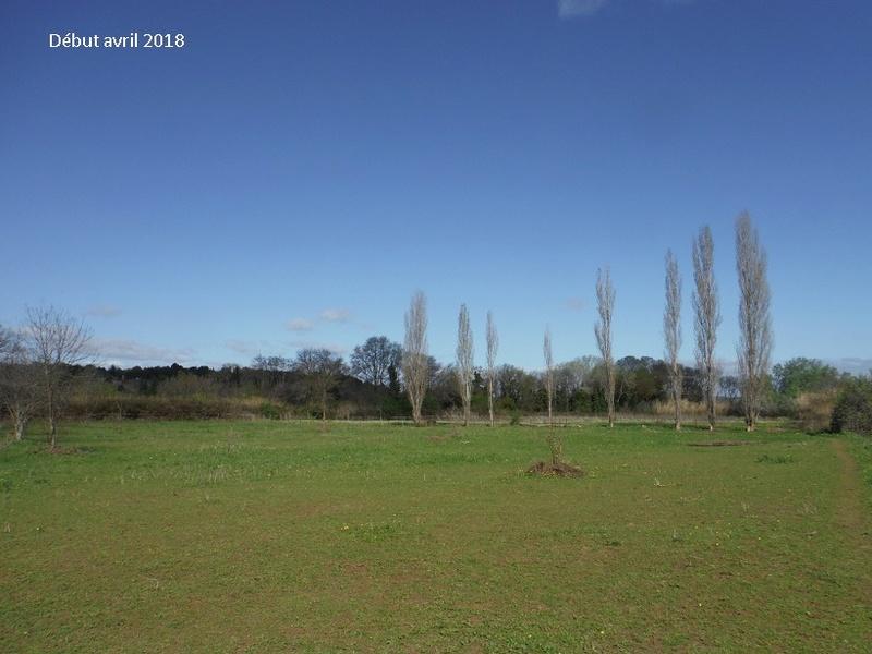 JdB de 4 hectares de pâtures dans le SUD : Avril 2019, et toujours la sécheresse... - Page 8 9021pa10