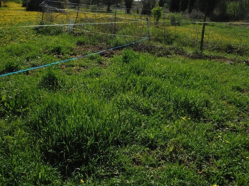 JdB de 4 hectares de pâtures dans le SUD : Avril 2019, et toujours la sécheresse... - Page 8 Dscf2417
