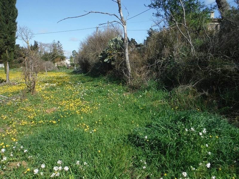 JdB de 4 hectares de pâtures dans le SUD : Avril 2019, et toujours la sécheresse... - Page 8 Dscf2510