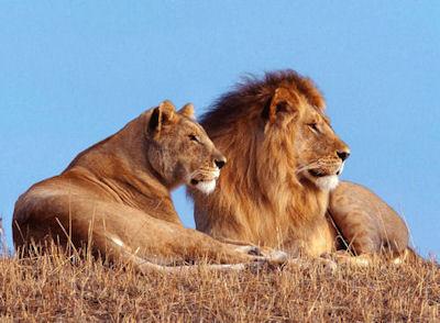 El Mundo Animal - Foro y adopciones de animales - Portal Leones11