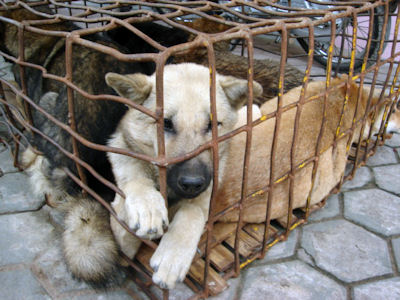 El Mundo Animal - Foro y adopciones de animales - Portal Matanz10