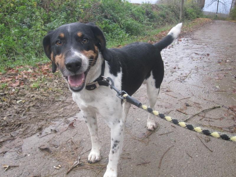 BENJI, croisé beagle mâle, 7 ans 1/2 (54) Benji_15