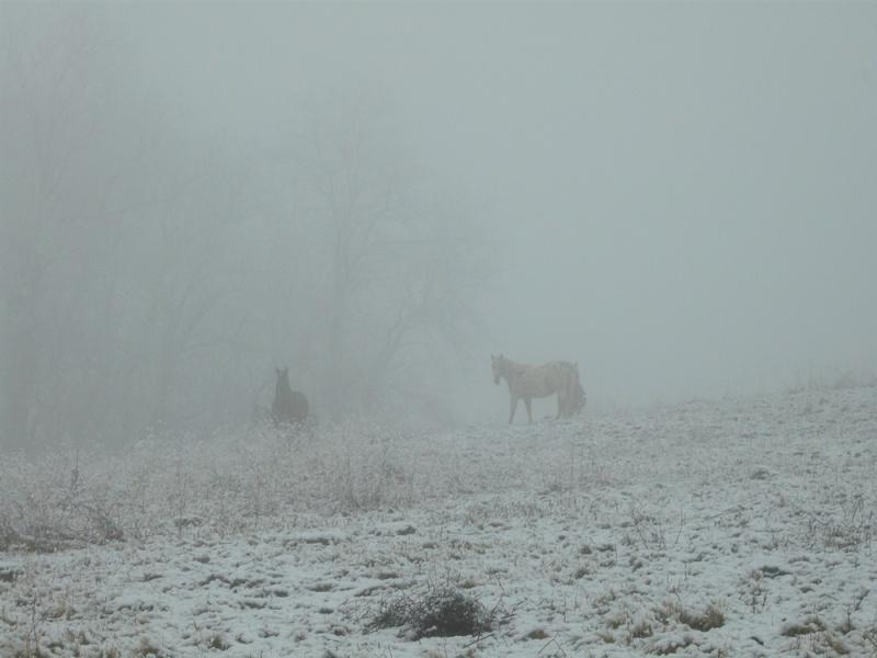 Le troupeau dans la brume... Brume10