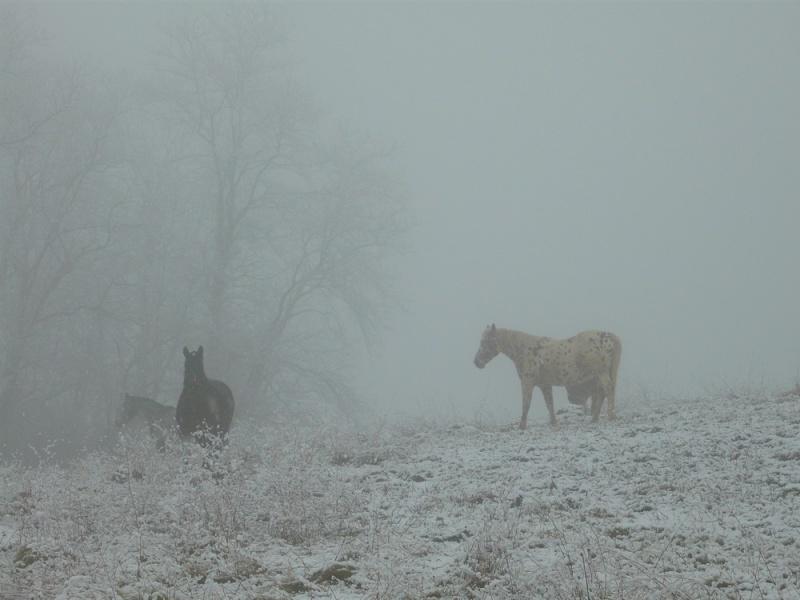 Le troupeau dans la brume... Brume110