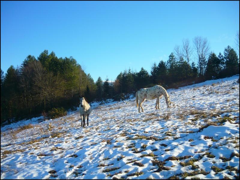 Appaloosa des neiges...Nouvelles photos ! Deuxbe10