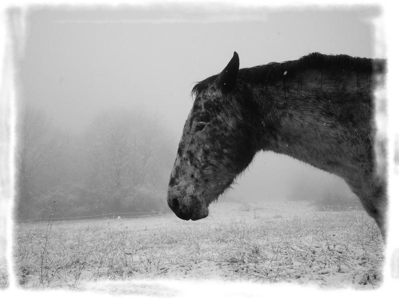 Le troupeau dans la brume... Etoile10
