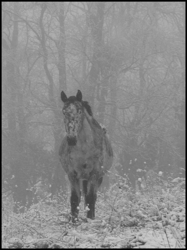 Le troupeau dans la brume... Etoile11
