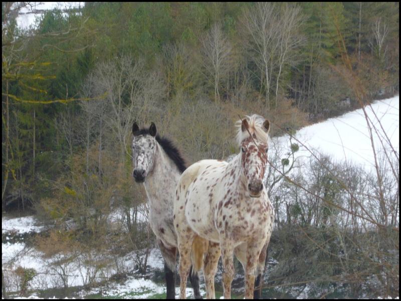 Appaloosa des neiges...Nouvelles photos ! Loutre11