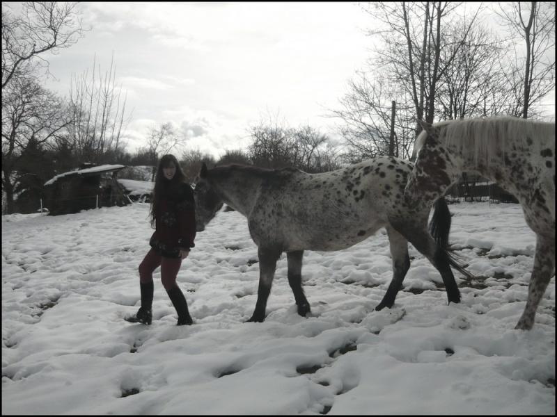 Appaloosa des neiges...Nouvelles photos ! Moitac10