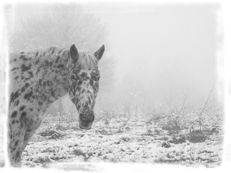 Le troupeau dans la brume... Nap110