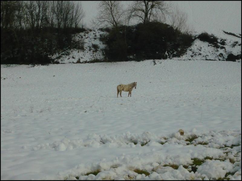 Appaloosa des neiges...Nouvelles photos ! Neigen10