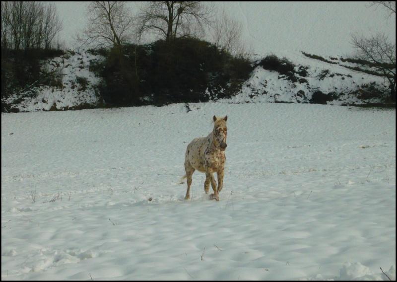 Appaloosa des neiges...Nouvelles photos ! Neigen11