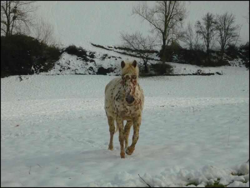 Appaloosa des neiges...Nouvelles photos ! Neigen12