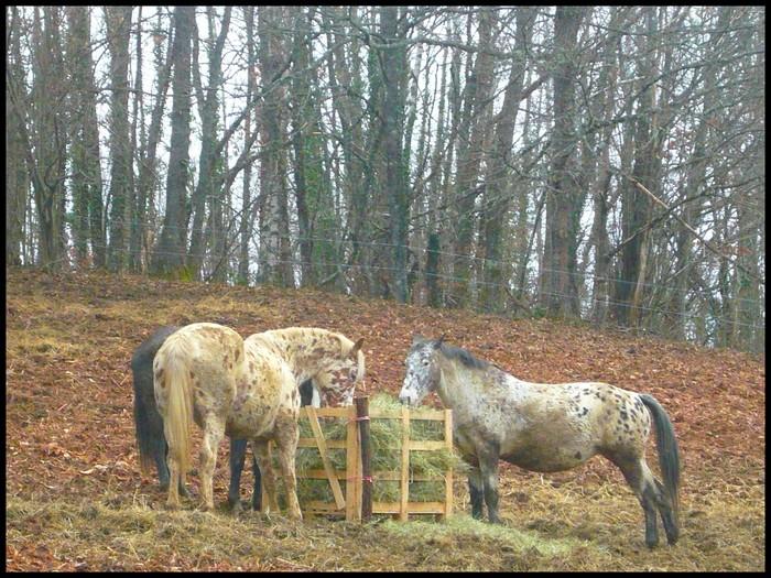 Aménagement de mon paddock d'hiver.... - Page 2 Rateli10