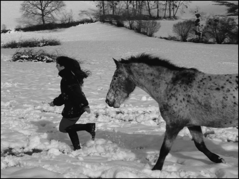 Appaloosa des neiges...Nouvelles photos ! Trotlo11