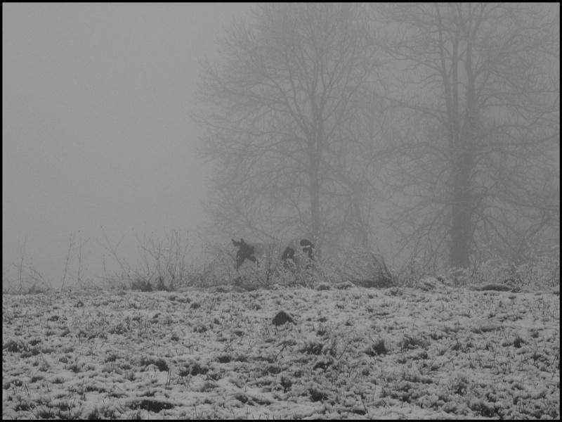 Le troupeau dans la brume... Ulanou10