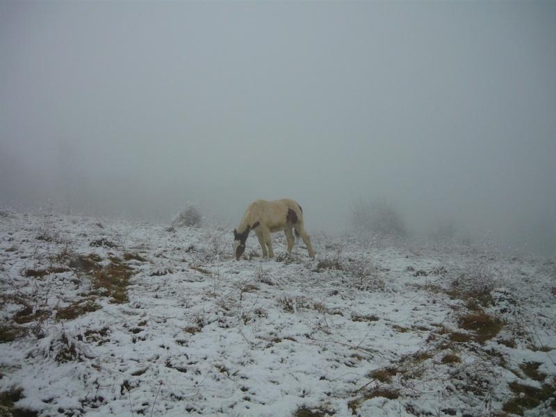 Le troupeau dans la brume... Ulanou11