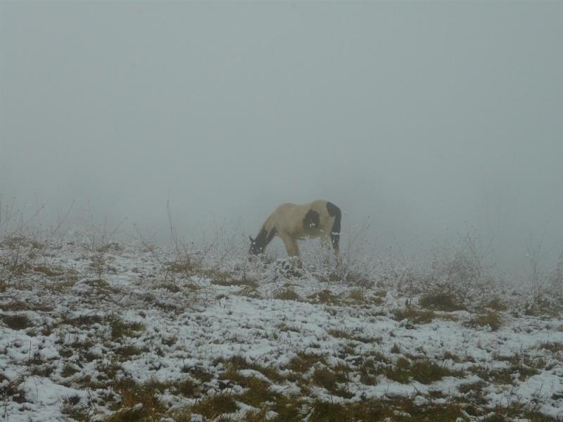 Le troupeau dans la brume... Ulanou12
