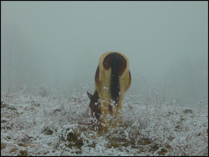 Le troupeau dans la brume... Ulanou13