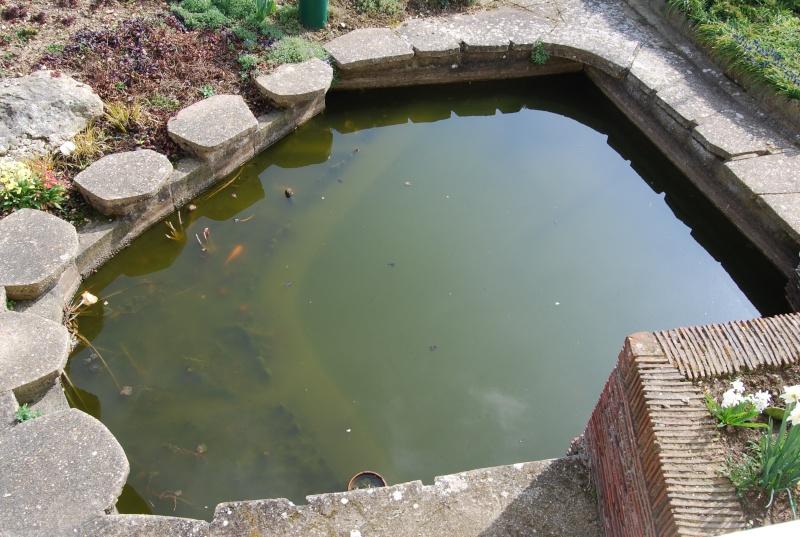 mon bassin! Dsc_0310