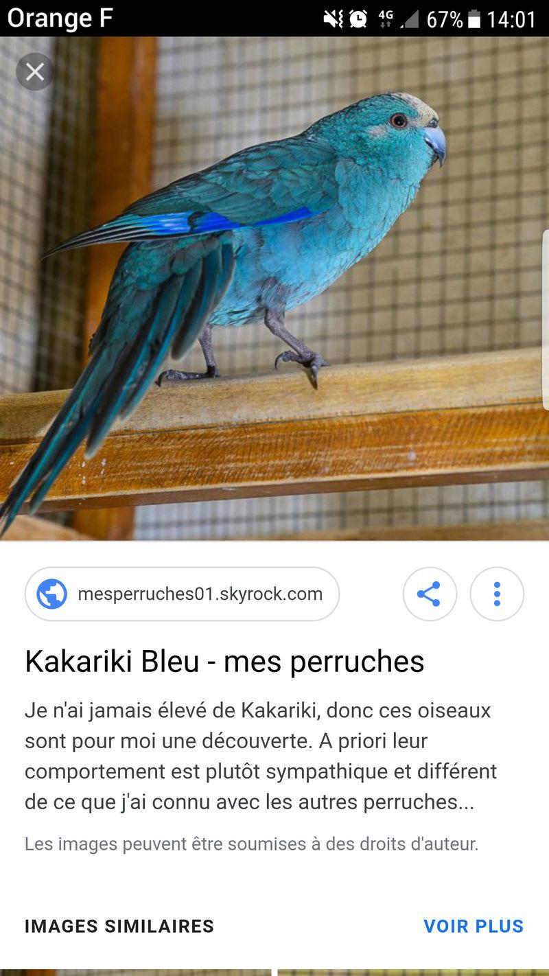 Recherche espèce kakariki Screen10