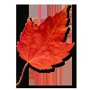 Autumn Leaves   / Feuilles d'automne 110