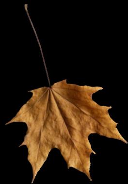 Autumn Leaves   / Feuilles d'automne 212