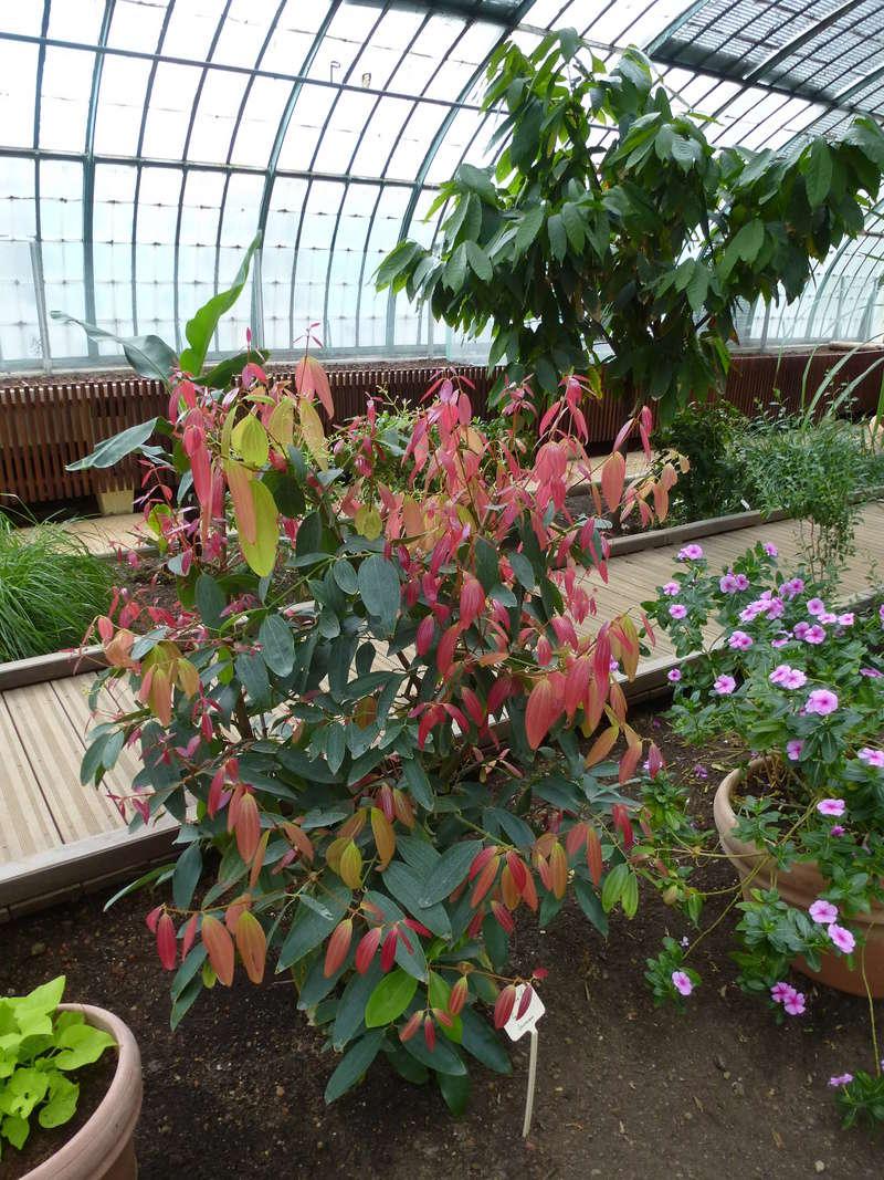 Magnifique plante utilitaire  P1270023