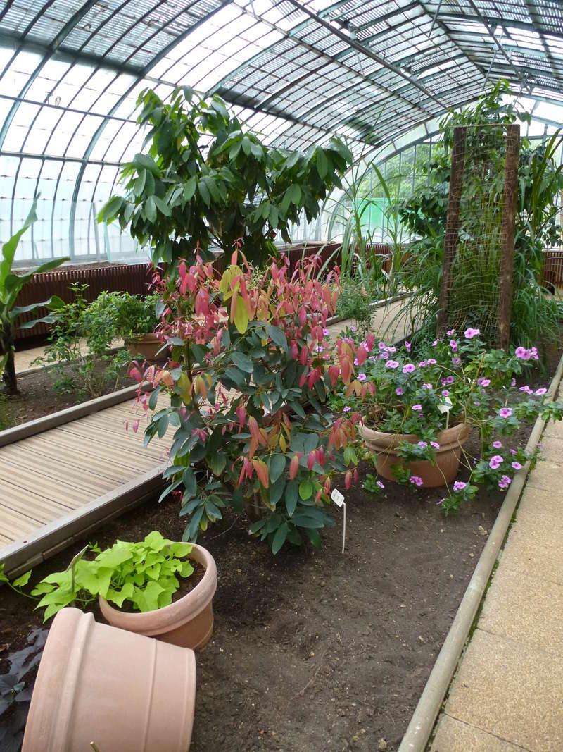 Magnifique plante utilitaire  P1270024