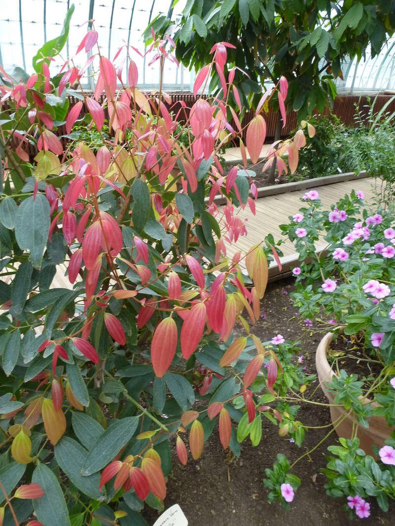 Magnifique plante utilitaire  P1270025