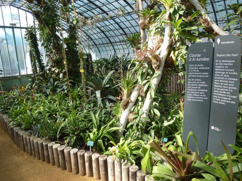 Vues d'ensemble de la serre de Bromeliaceae d'Auteuil  P1270128