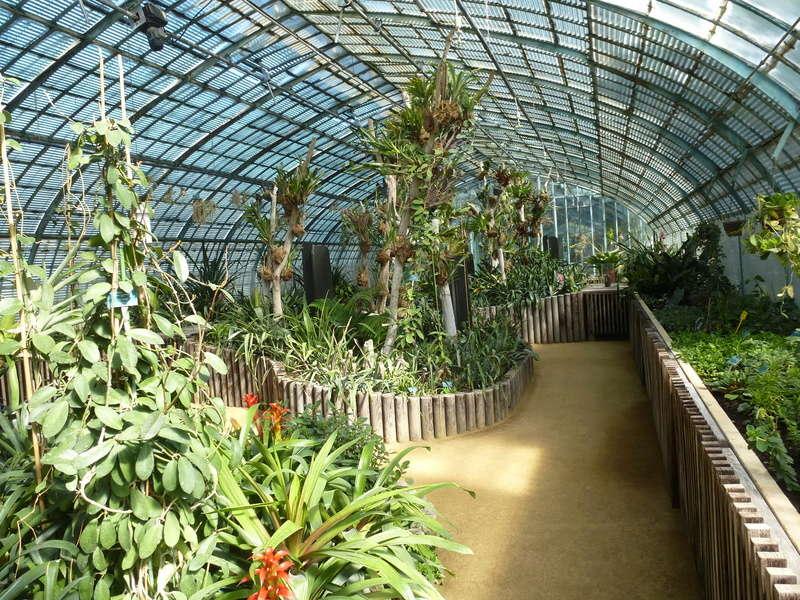 Vues d'ensemble de la serre de Bromeliaceae d'Auteuil  P1270130