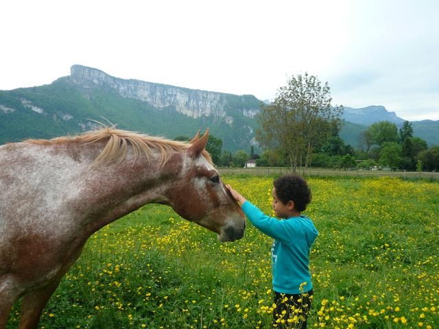 """ON VOTE Concours photos """"Nos chevaux et la tendresse"""" P1140010"""