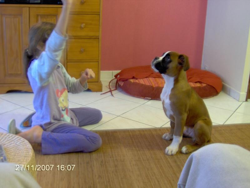 Titou et Coquin le Boxer 27_11_11